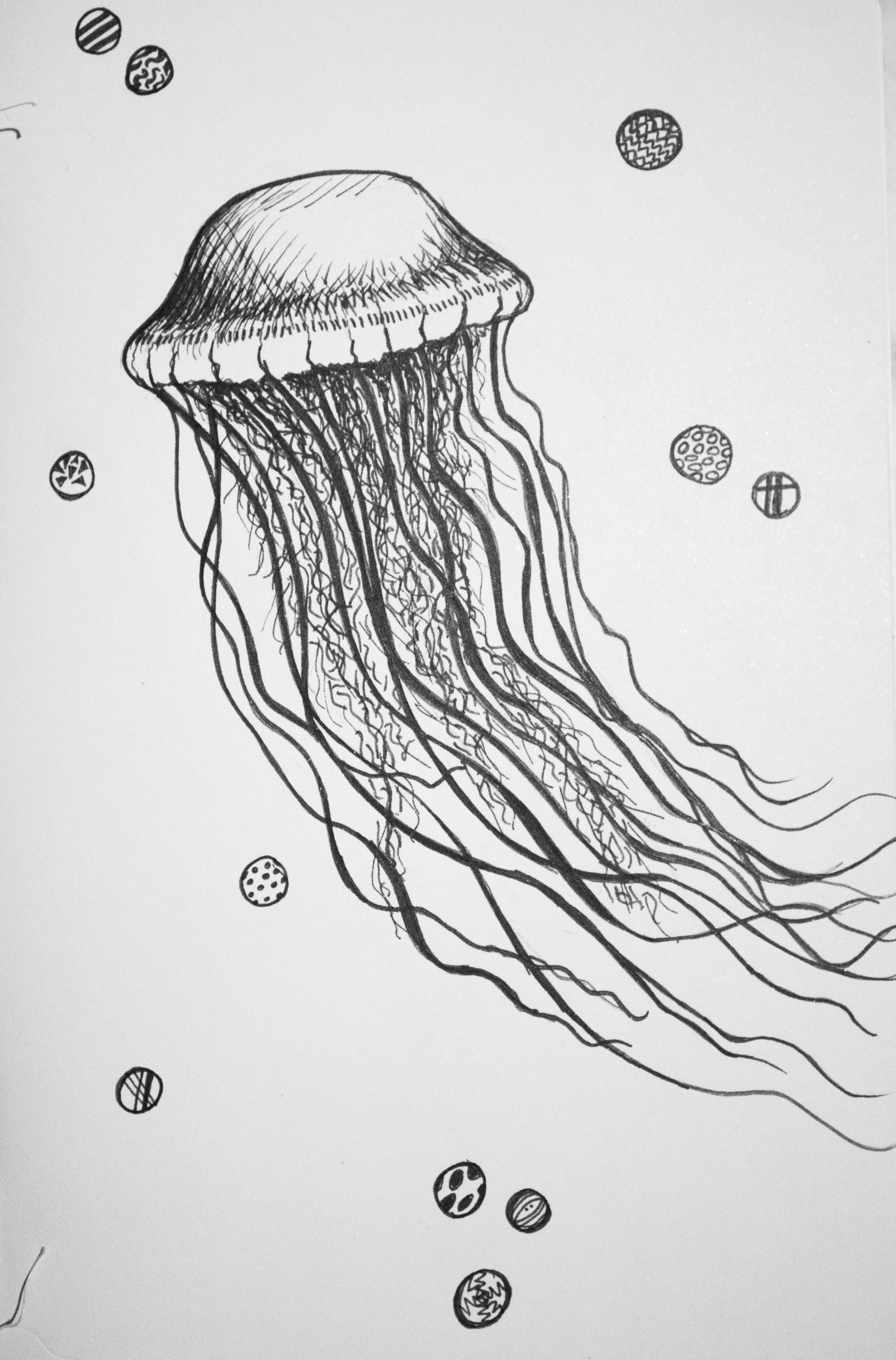 Jellyfish, scad style