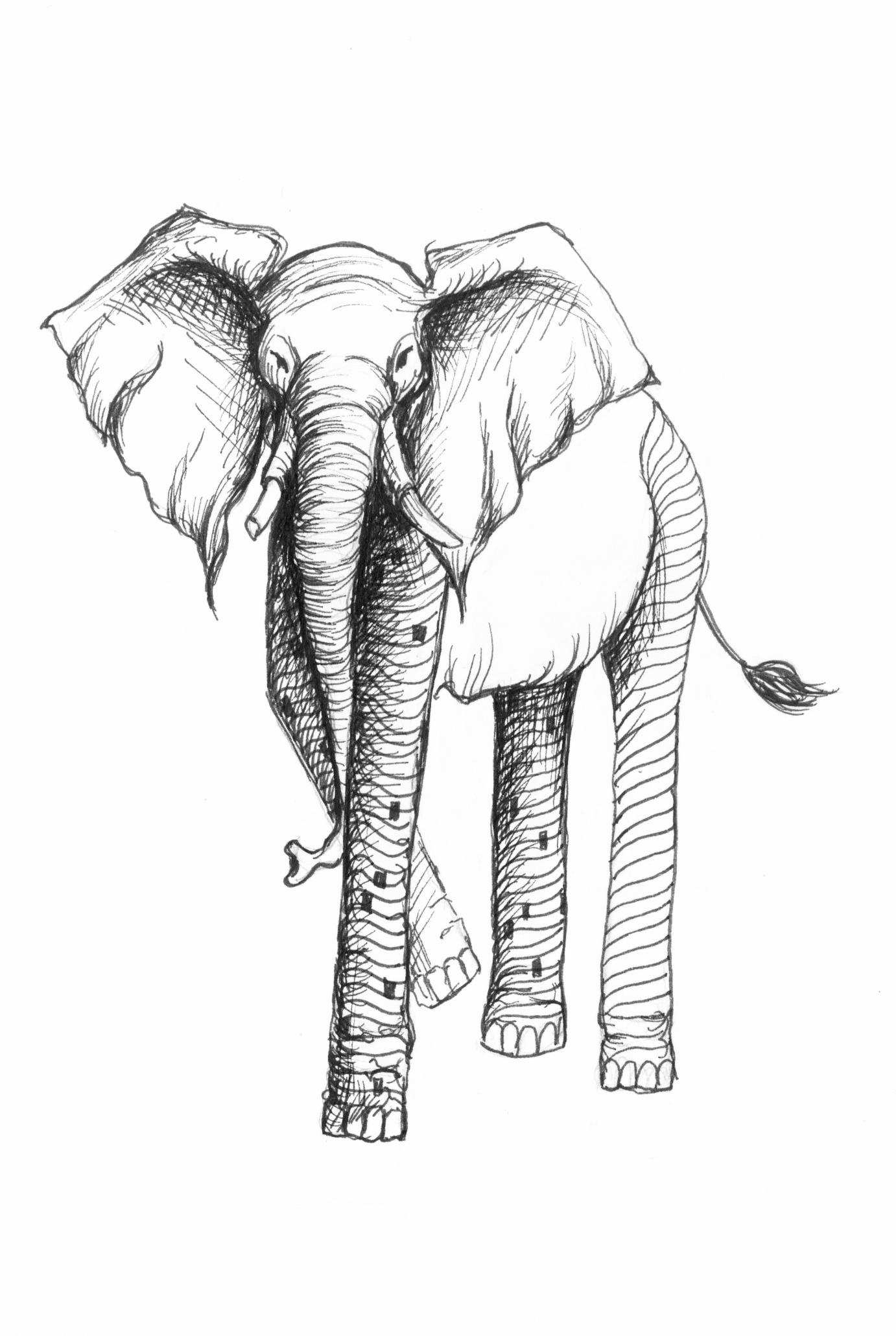 Elongated elephant