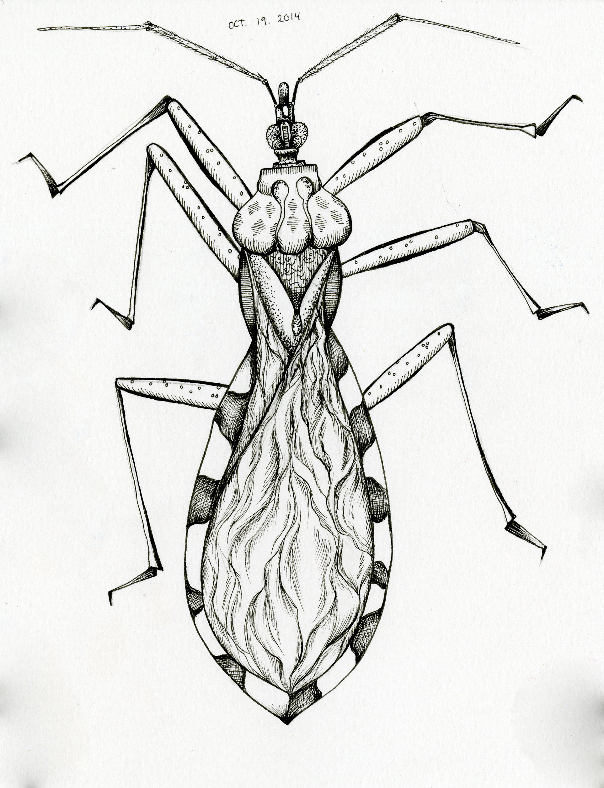 Inktober 19 – Anotherinsect!